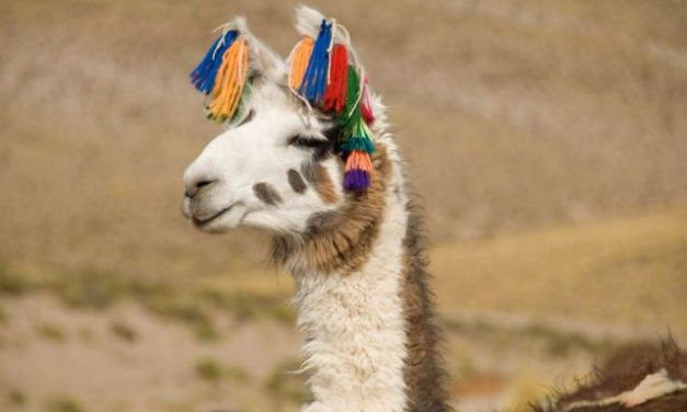 25 imágenes de animales tiernos para liberar estrés [Galería]