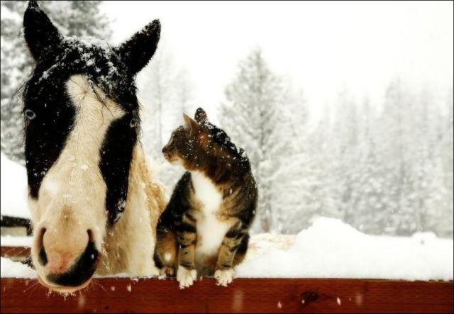 Top 10 + 5 Fotos de animales graciosos
