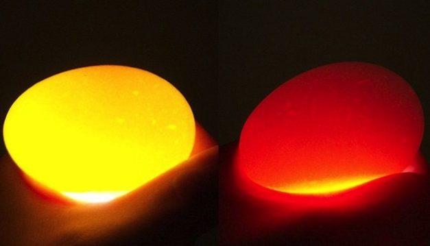 Como hacer huevos duros revueltos – recetas divertidas